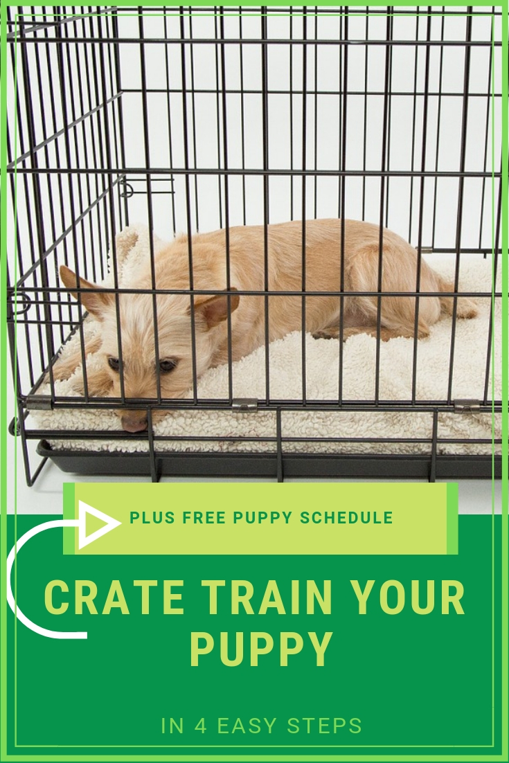 4 Easy Steps To Crate Training Your Puppy Tutor Your Dog