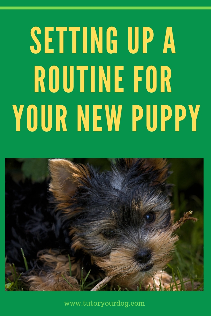 Setting Up A Routine For Your New Puppy Tutor Your Dog